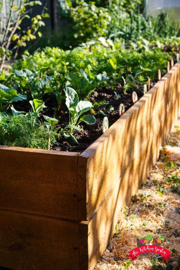 How To Start A Raised Bed Garden Raised Garden Beds Herb Garden