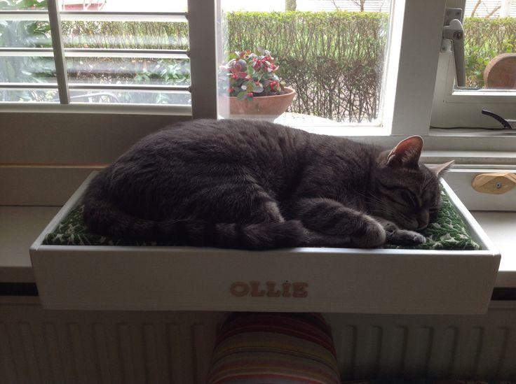 Ollie in zijn nieuwe bed, mijn gekke kat