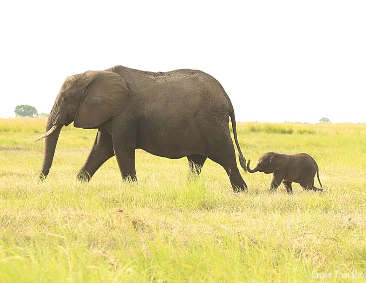 Mother and baby. Elephants in Chobe, Botswana!   http://crossthatbox.com
