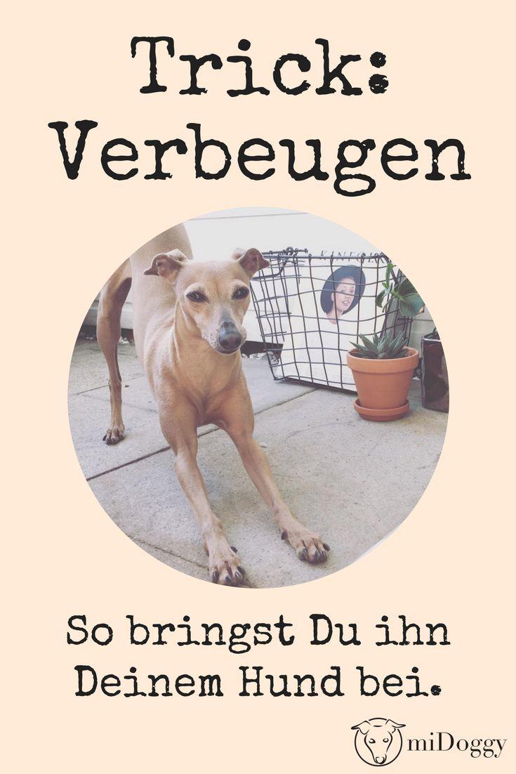 Trick – Verbeugen – miDoggy    Ideen rund um den Hund