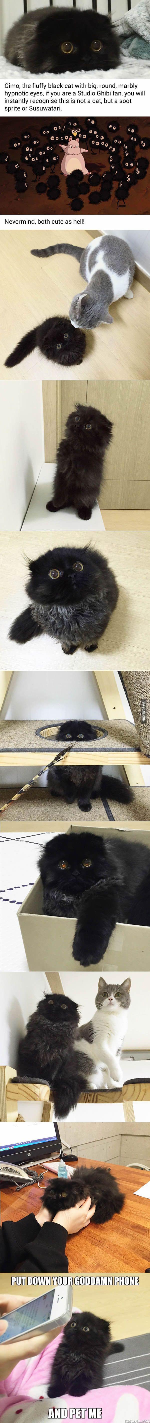 This Giant-Eyed Cat Looks Like Studio Ghibli's Soot Sprite - Disregard bad language last frame!