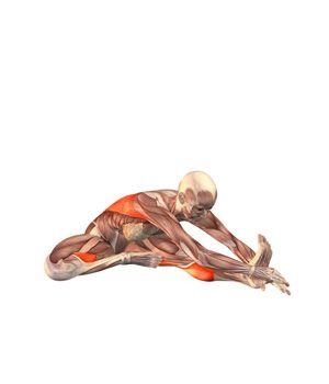 janu sirsasana bend to left leg  yoga  yoga anatomy