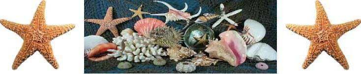 Naples Sea Shell Company.  Sea Shells, Coral, and Sea Life for sale.