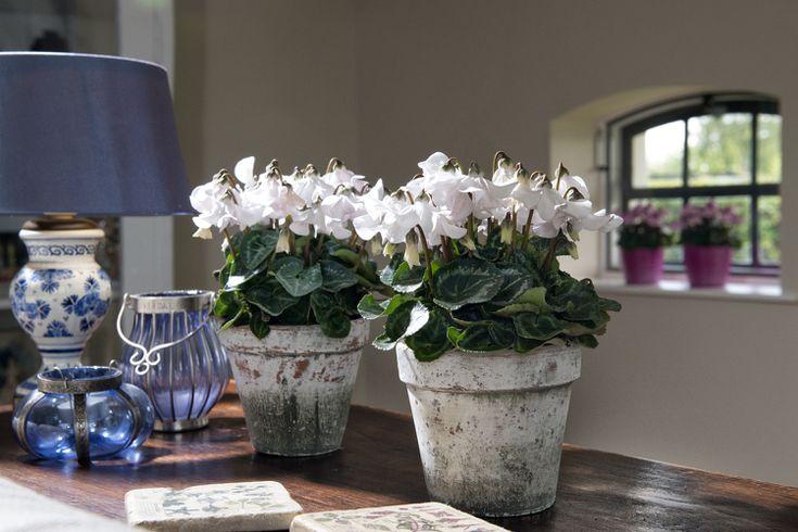 plantes d intérieur parfumées une sélection séduisante plantes d ...