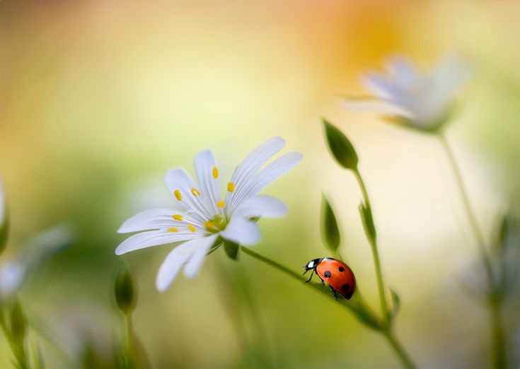 Loved collecting ladybugs