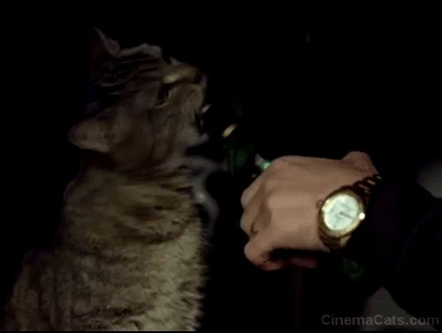 A tabby cat partakes in a little beer (hopefully really just water) offered by Morris (Jon Abrahams) in the romantic comedy Prime (2005).