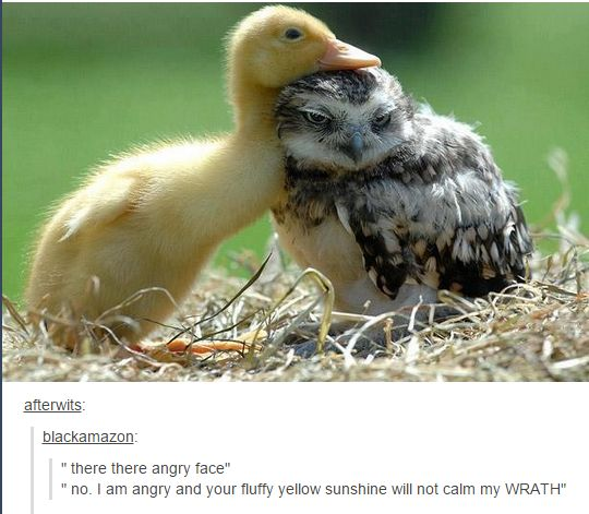 """there there angry face""   ""no, I am angry and your fluffy yellow sunshine will not calm my WRATH"""