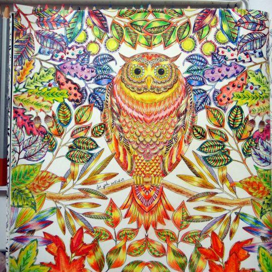 94 Best Images About Owl Secret Garden Coruja Jardim Secreto On Pinterest