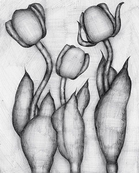 Kwitnace tulipany