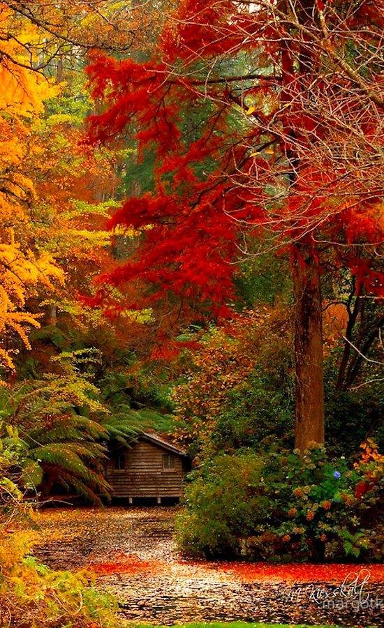 Rustic living in the Dandenong Mountains east of Melbourne, Victoria, Australia • photo: Margot Kiesskalt on RedBubble
