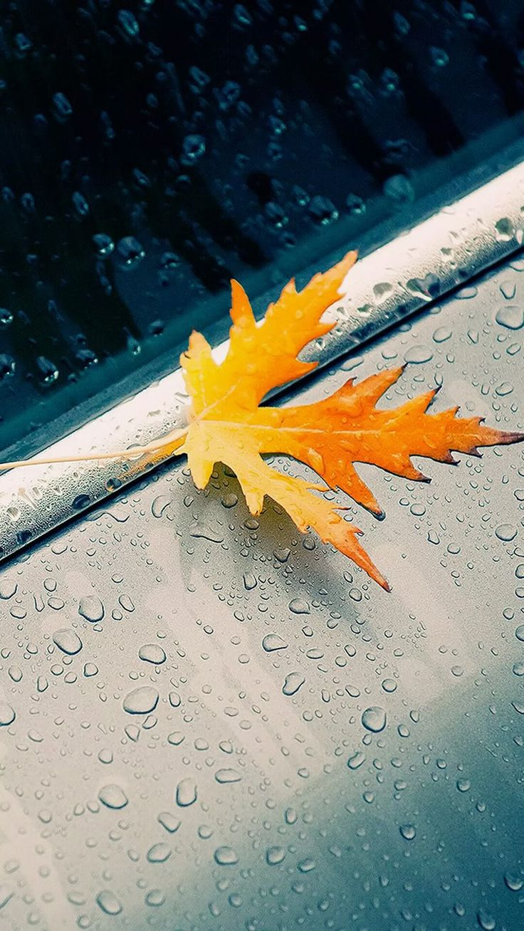 Autumn Rain iPhone wallpapers. Tap to see more Fall season iPhone wallpapers, lockscreen, fondos. - Nature, Leaves, Trees landscape, photography. - @mobile9
