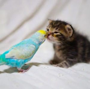 "* * KITTEN: "" Yoo couldn't sell fer 3 bucks on E-Bay."" PARAKEET: "" Tough smart mouth. I haz no intention of goin' anywheres. And yoo better learn to respect yer elders ! Chirp!"""