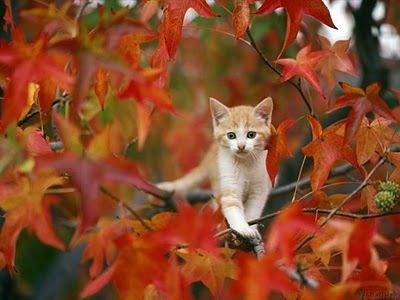 Kitty in the fall