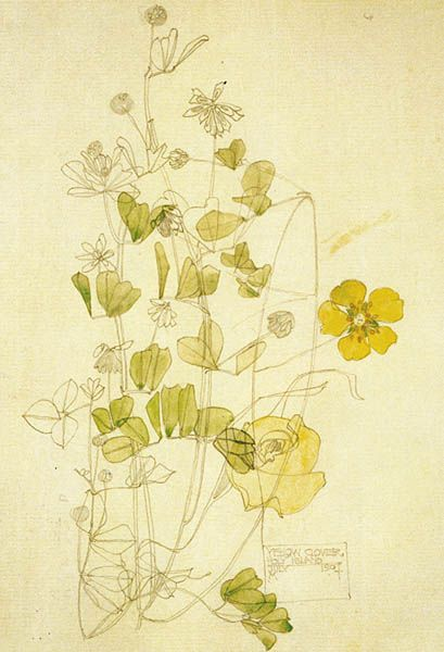 Charles Rennie Mackintosh - Yellow clover, 1901 Pencil and watercolour Museum no. E.844-1968