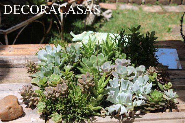 Como fazer mudas de suculentas: para replante ou para criar novos vasos é muito fácil cuidar e multiplicar suas suculentas. Confira as dicas de Flávia Ferrari.