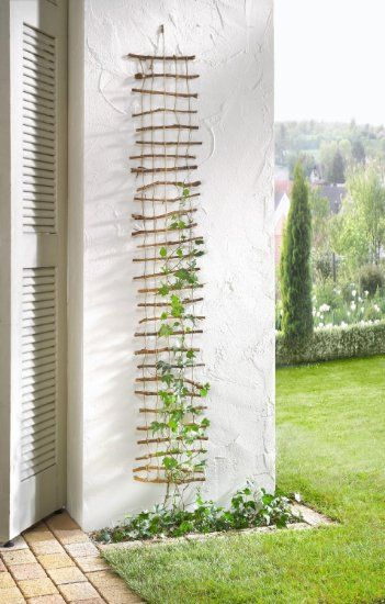 DIY ladder trellis for climbing plants.  Enjoyed by www.mygrowingtraditions.com