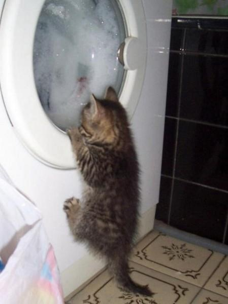 Baby kitty helping with the wash ...Do you have your first 500 Twitter Followers? Check this out to know how FREE… http://johneasycash67.blogspot.com/2014/01/how-to-get-your-first-500-twitter.html Please Repin this blog post and help others