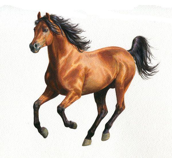 Cheval bai au galop equitation pinterest cheval bai equitation et galop - Comment dessiner un cheval au galop ...