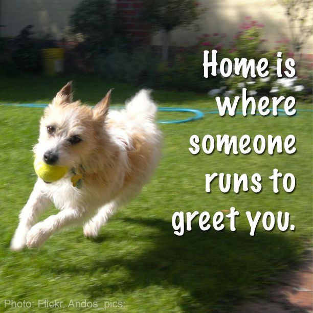 Image result for pets quotes