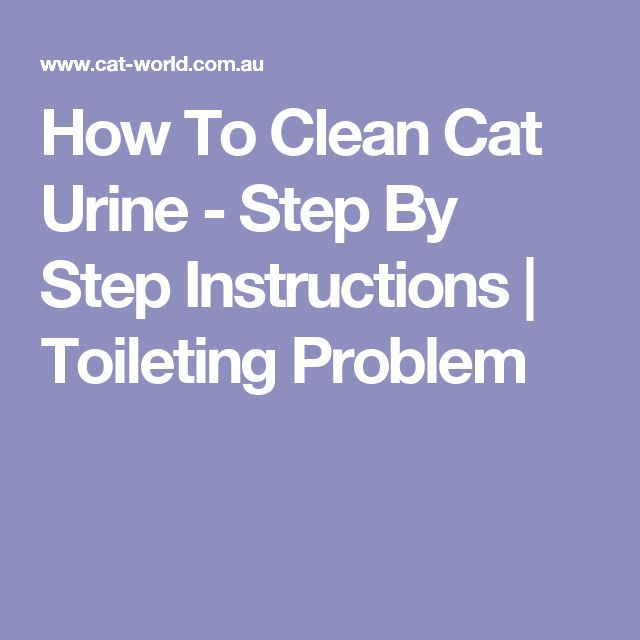 How To Clean Cat Urine - Step By Step Instructions | Toileting Problem