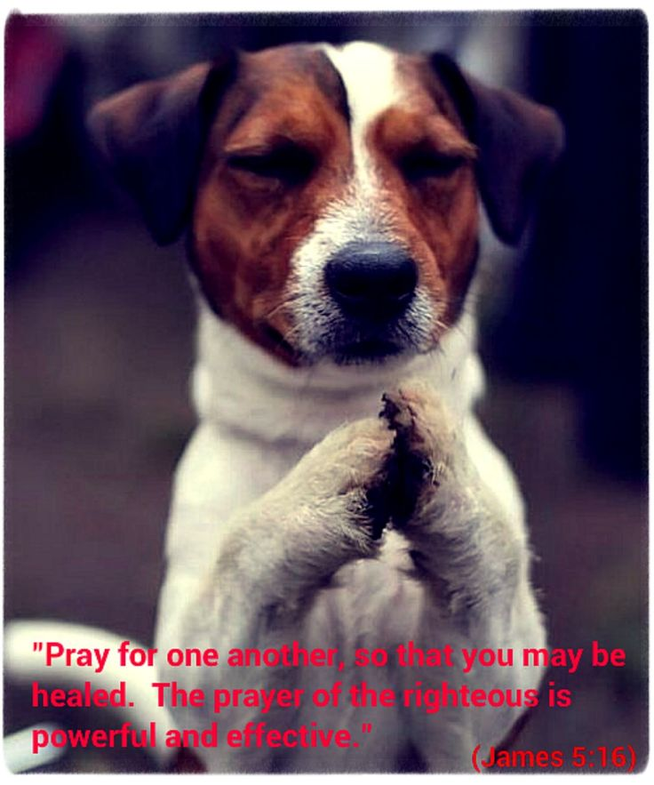 """""""Pray for one another, so that you may be healed.  The prayer of the righteous is powerful and effective.""""  (James 5:16)"""