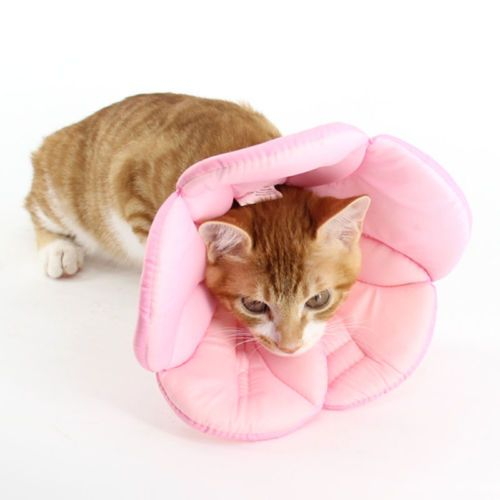 Cat Collars Medical