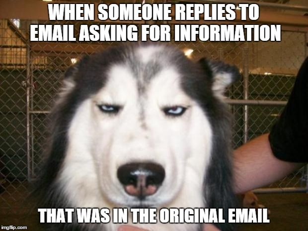 Sometimes you think your coworkers are illiterate | WHEN SOMEONE REPLIES TO EMAIL ASKING FOR INFORMATION THAT WAS IN THE ORIGINAL EMAIL | image tagged in annoyed dog,email,office | made w/ Imgflip meme maker
