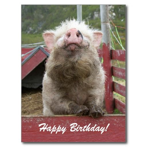 >>>Low Price Guarantee          Cute Pig Happy Birthday Greeting 42a Post Card           Cute Pig Happy Birthday Greeting 42a Post Card lowest price for you. In addition you can compare price with another store and read helpful reviews. BuyThis Deals          Cute Pig Happy Birthday Greetin...Cleck Hot Deals >>> http://www.zazzle.com/cute_pig_happy_birthday_greeting_42a_post_card-239601221685287607?rf=238627982471231924&zbar=1&tc=terrest
