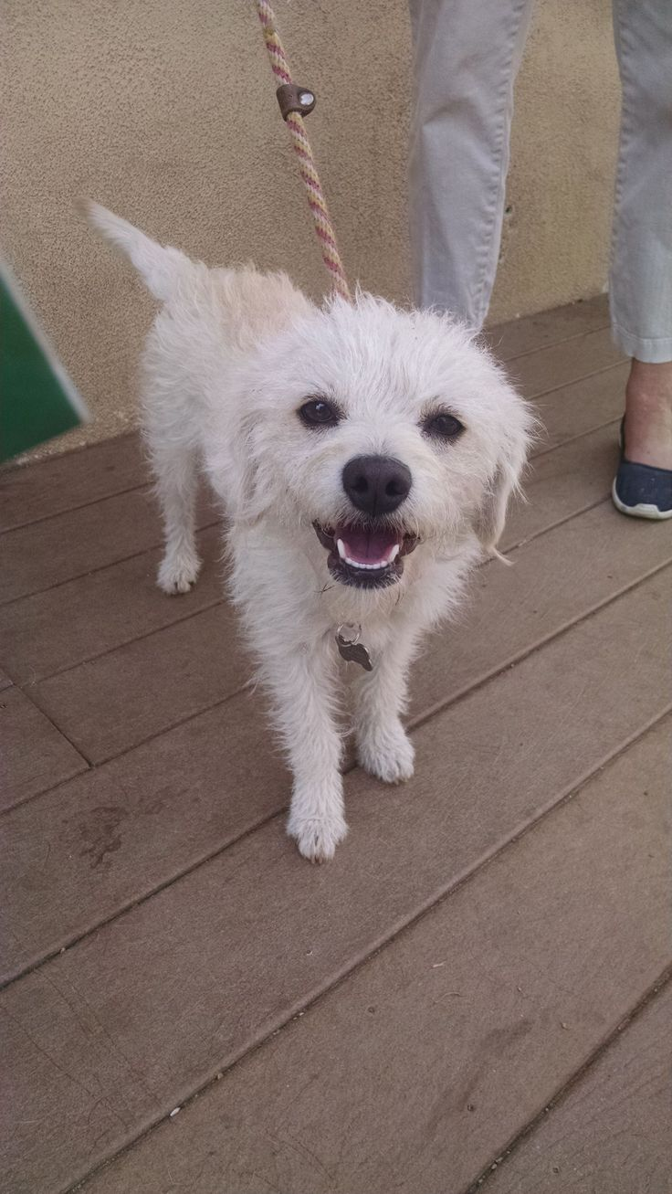 Adopt Myrtle on Petfinder Terrier mix dogs, Dogs