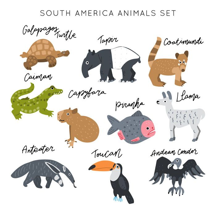 My South America Animals Clipart South America Animals Animal Clipart Animal Illustration