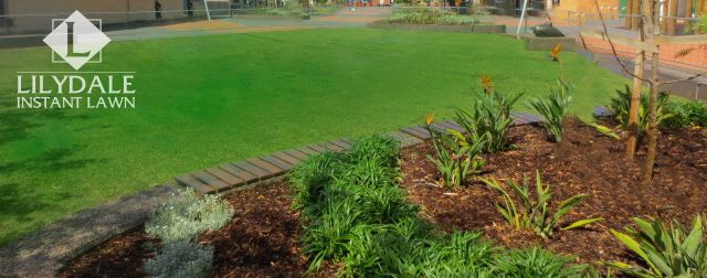 Wellington Shire Counicl Mall - Lilydale Instant Lawn Care | Love your lawn | Great grass | Lily & Dale | Follow us | Garden Tips & Advice | Contact us | Lawn Solutions Australia  Lawn Supplier | Instant Turf |Sir Walter Buffalo DNA Certified | Lawn Solutions Australia | Online Store | Local Pick up & Delivery | Lawn Care | Turf Farm | Melbourne | Victoria | Garden | Grass