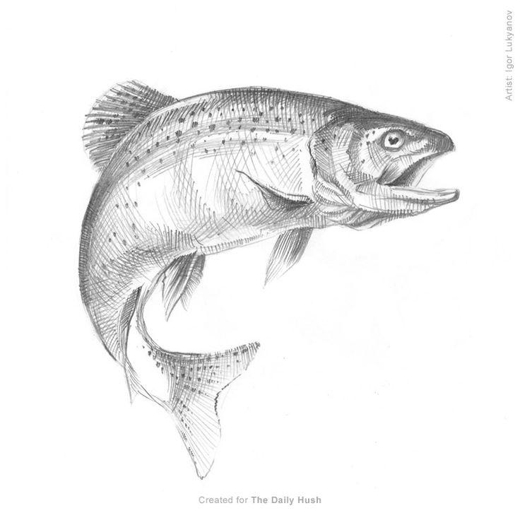Fish trout sketch drawing www.buildfishinglures.com www.pennylure.com