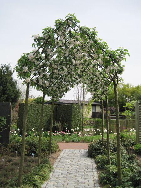 Puutarhaunelma - Unelma puutarhasta