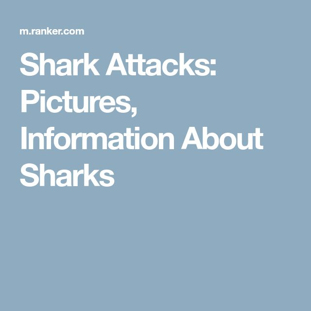 Shark Attacks: Pictures, Information About Sharks