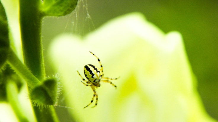 Yellow Spider by Jim Tsipoutas, via 500px