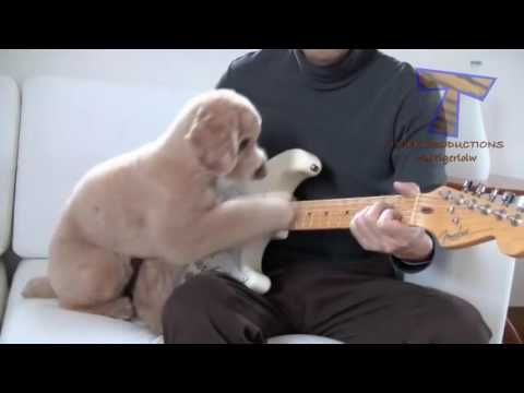 video lucu binatang: funny animals playing instruments cute