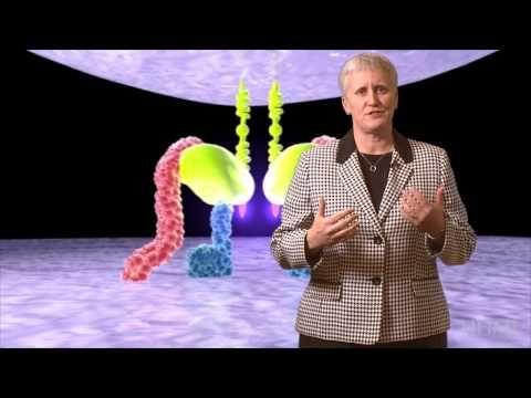 HIV life cycle | HHMI BioInteractive