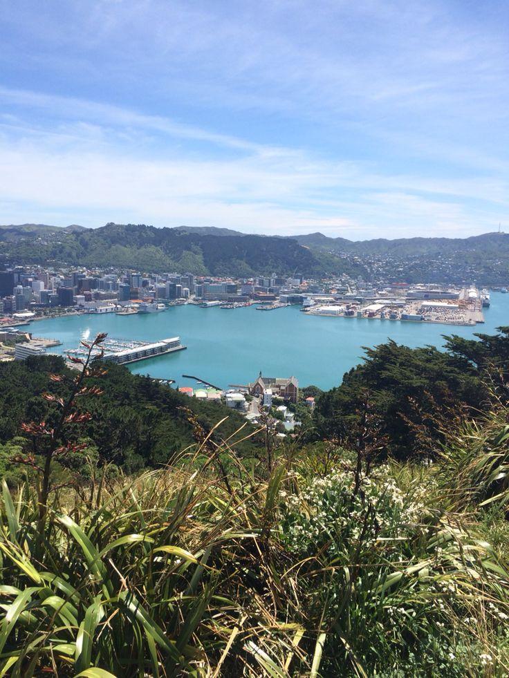 Wellington view Mt Vic Wellington harbour