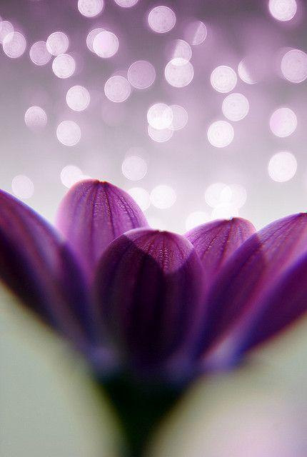 **Purple