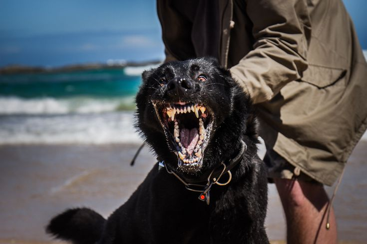 Hundträning i Sydafrika. Foto: Denise Eriksson