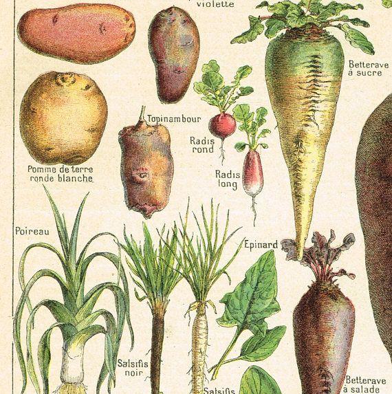 9 best Stampe per cucina images on Pinterest   Antique prints ...
