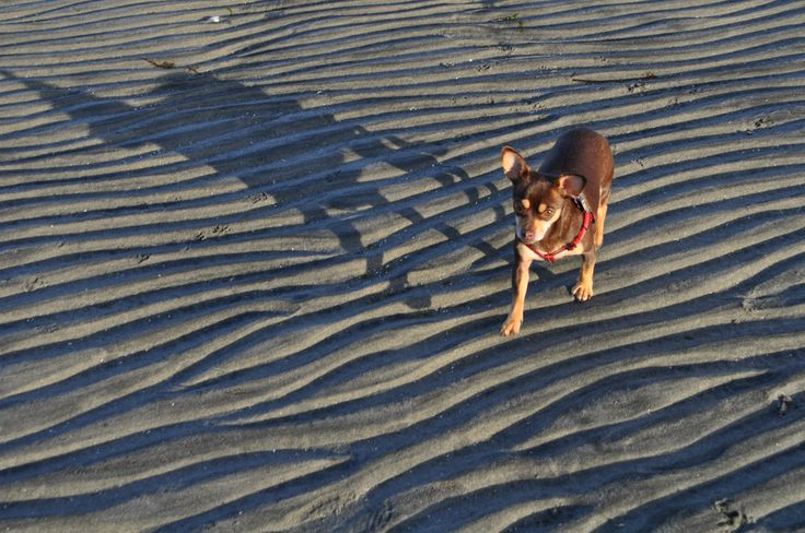 Goose Spit....small dog with a big shadow!