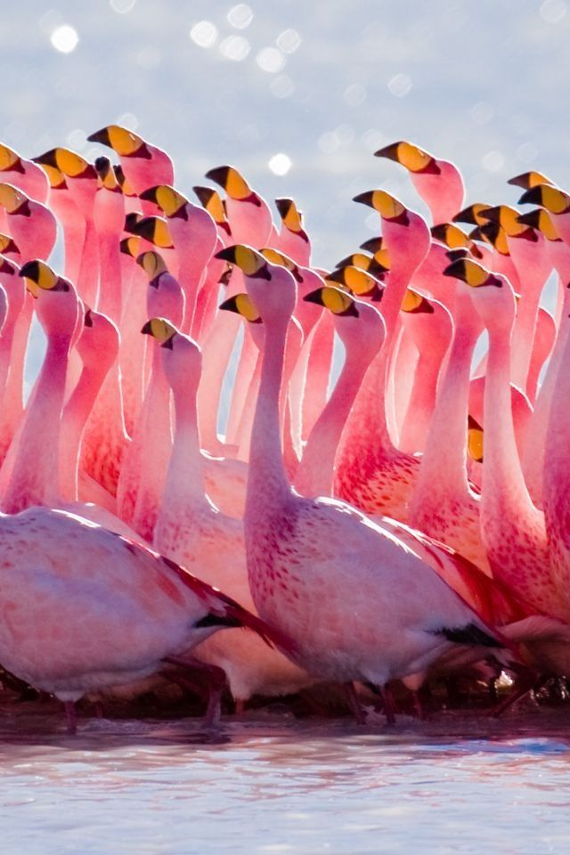 Flamingo.  ~ Wonder what they're looking at???