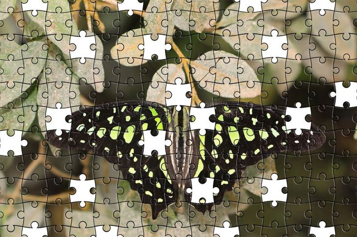 Free Jigsaw Puzzle Online - Butterfly