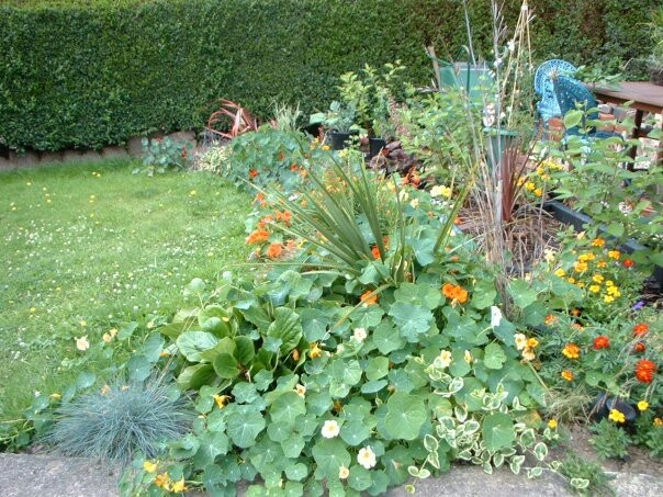 An early photo of one of our gardens...just sow & pray!
