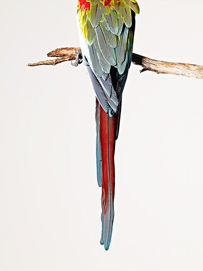 Photograph by James Day  #Animals #Parrot #Feathers #Photography #StillLife #Art #JamesDay