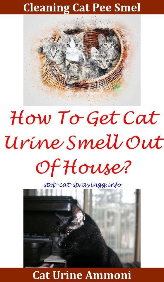 Vinegar To Clean Dog Urine On Carpet
