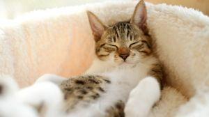 Просмотреть обои кот, лежать, сон, полосатый 1920x1080