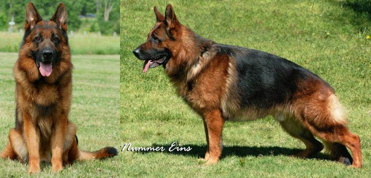 German Shepherd Male and Female Dog Names