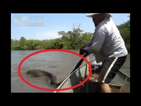 Crazy Brazilian Guy Harasses A Snake - #Anaconda #Brazil #crazy